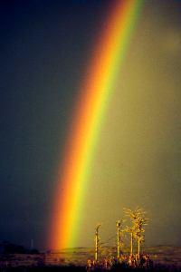 Nakuru rainbow