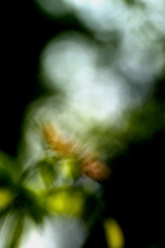 garden_157X