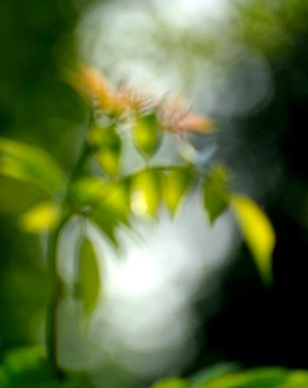 garden_158X