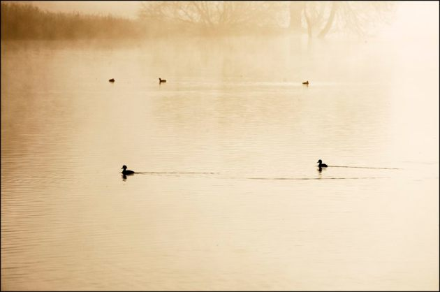 Mist lifting, Herons Green 5