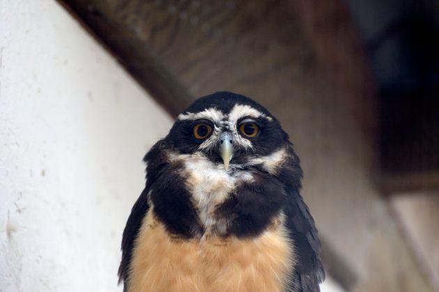 owls_162TALKING_IMAGES