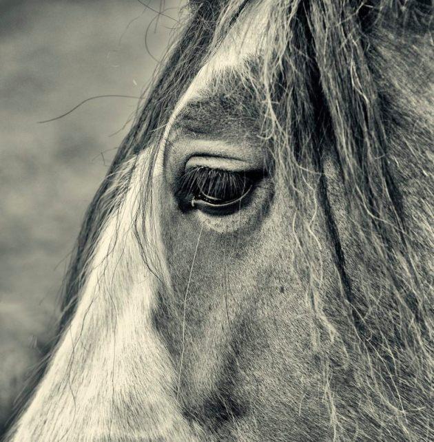 Portrait of a horse, near Catcott Burtle
