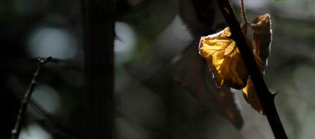 dead-leaf