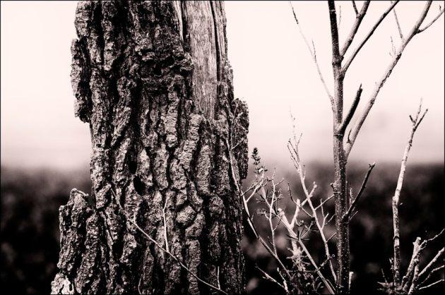 dead-tree-mono