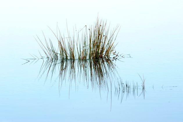 flooded-field