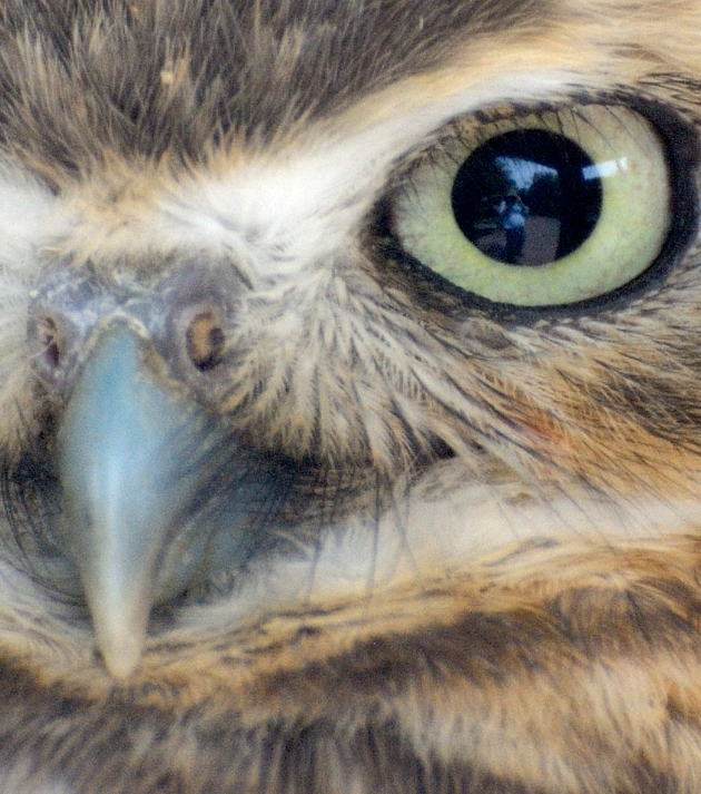Selfie in an owl's eye