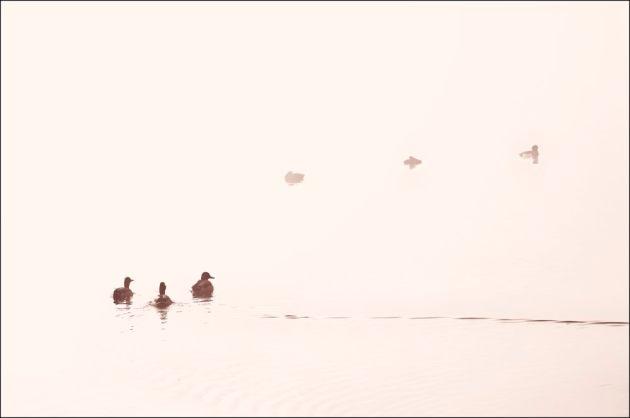 mist-lifting-herons-green-7-mono