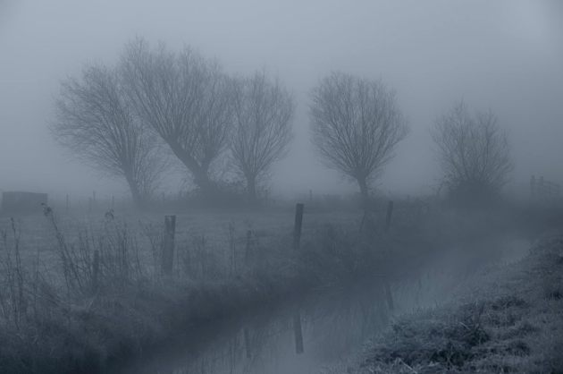 willows-in-the-mist-tadham-moor-mono