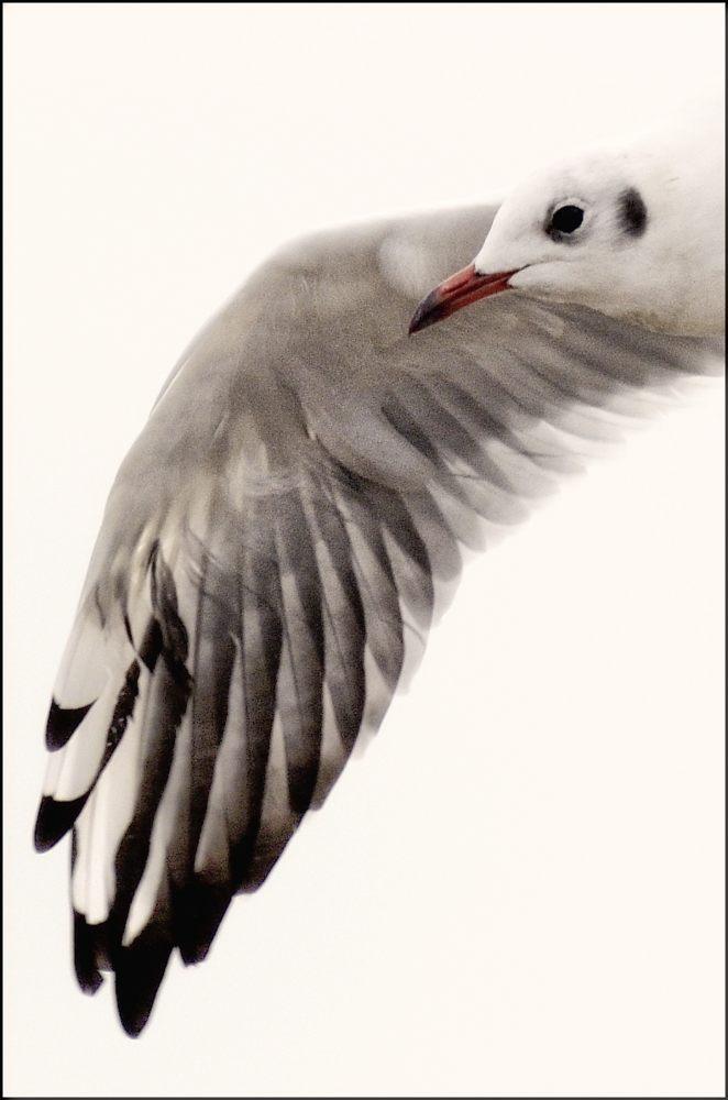 still-life-in-flight