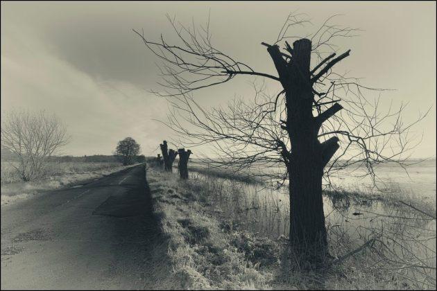 the-view-eastwards-butleigh-moor