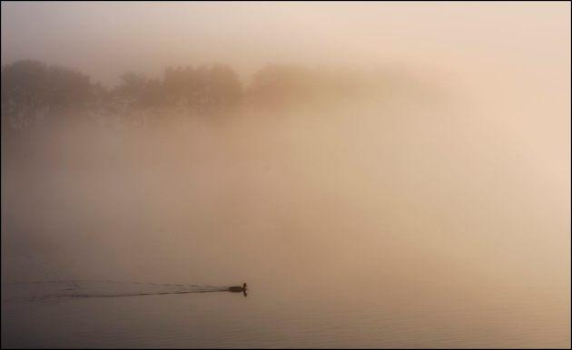 Mist lifting, Herons Green 1