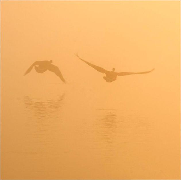 Mist rising, Herons Green 2