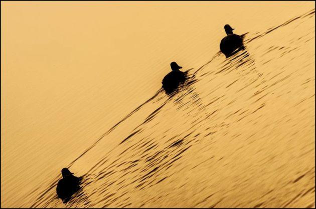 Mist lifting, Herons Green 4