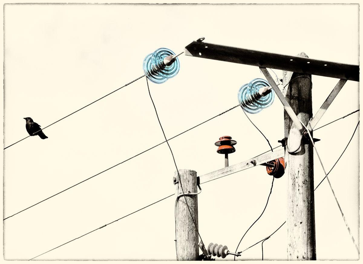 jackdaw-with-electrics-mono-colour