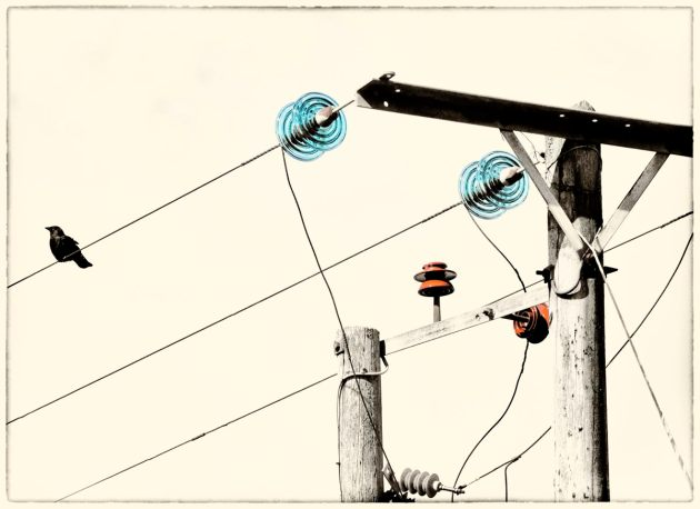 jackdaw-with-electrics-mono-colour