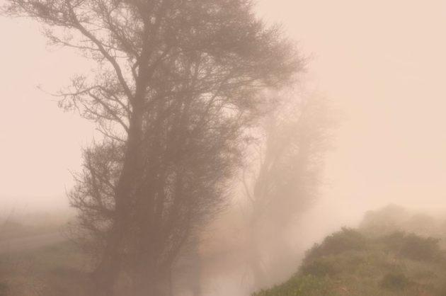 Fog, Tealham Moor 3