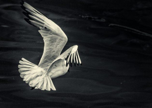 still-life-in-flight-2-mono