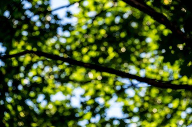 trees-above-baldwin-street
